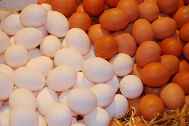 Resultat d'imatges de huevos y gallinas